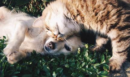 Hundar Och Katter
